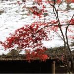 紅葉が有名な埼玉県新座市の平林寺に撮影散歩に行ってきた